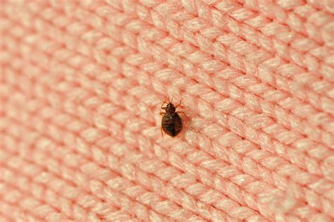 ways to prevent bed bugs top 3 ways to avoid bringing bed bugs