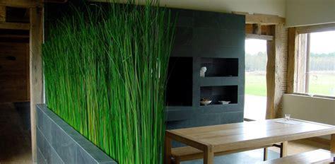 piante decorative da interno piante da interni