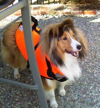 bumpers playhouse dog grooming burlington wi sheltie nation archive water shelties