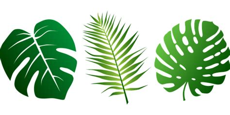 png jungle leaf transparent jungle leafpng images pluspng