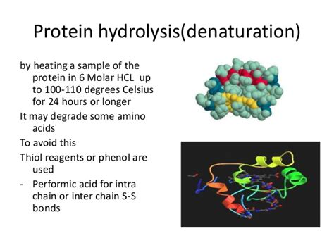 protein hydrolysis protein sequencing presentation