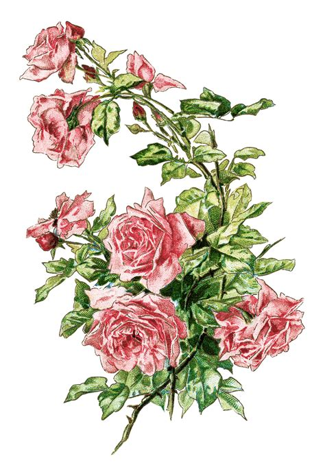 library clipart images free vintage roses images free clip free