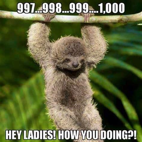 Dragon Sloth Meme - funny sloth memes