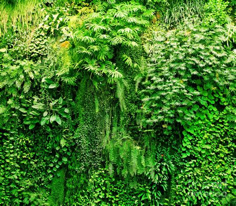 foliage of plants tropical plants green background photograph by michal bednarek