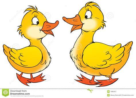 clipart duck 2 ducks clipart clipground