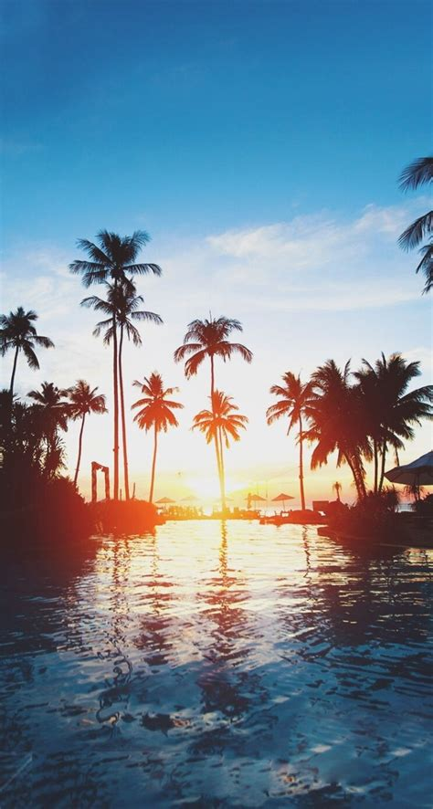 wallpaper iphone 6 hawaii 1000 images about palm trees on pinterest beautiful