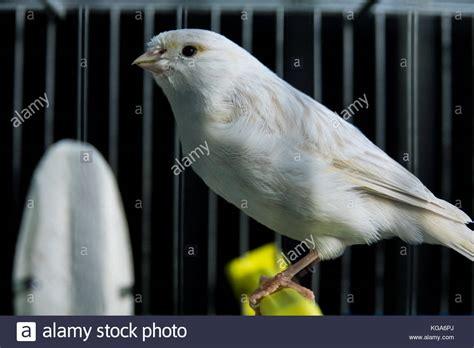 canary bird cage stock photos canary bird cage yellow stock photos canary bird cage