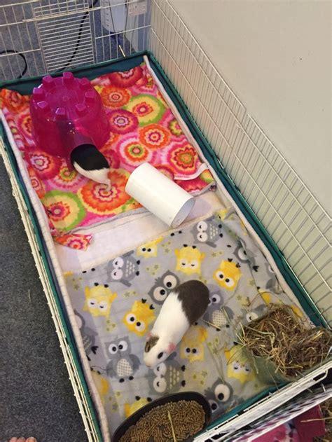 easiest    fleece bedding  guinea pig