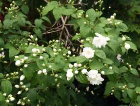 unrecognized plants