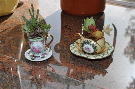 cactus planter diy tea cup cactus planter misobelle