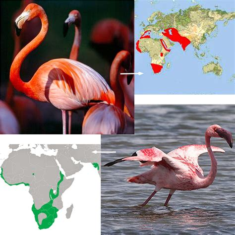 what color is a flamingo as many exceptions as fall leaves and orange flamingos