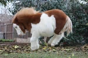 mini pony the 12 most adorable miniature horses on the web