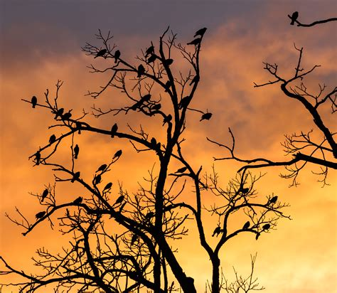 file silhouetted birds in a tree 7515037378 jpg