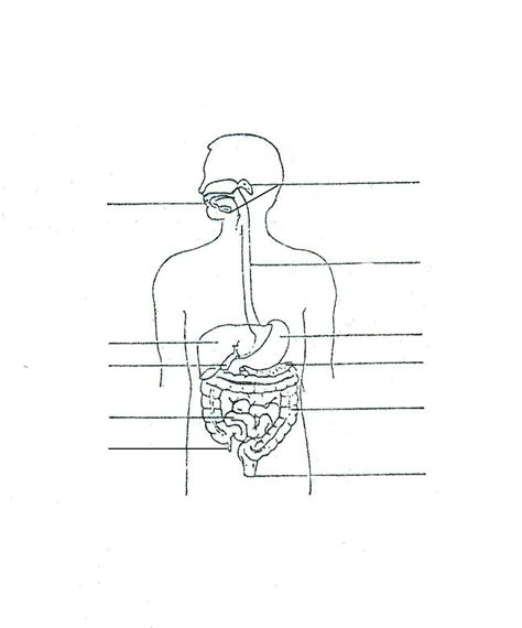 Digestive System Diagram Worksheet by Pin Blank Digestive System Diagram For About Pat