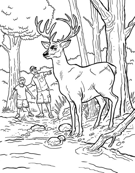 bass pro shop coloring pages coloring pages