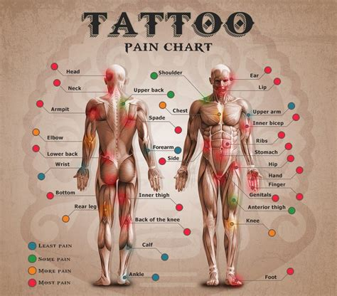 tattoo pain chart chest wondering how much that next tattoo will hurt check out