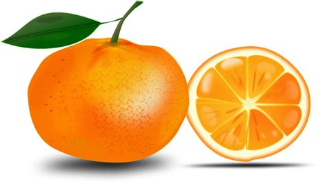 orange clipart best orange clipart 13379 clipartion