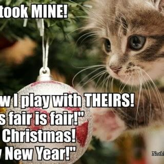 Cute Christmas Meme - cat a logs giggl christmas memes pet kitty cute about litle pups