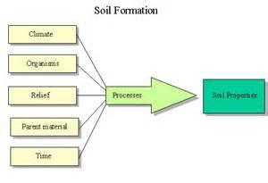Image result for Factors of soil formation