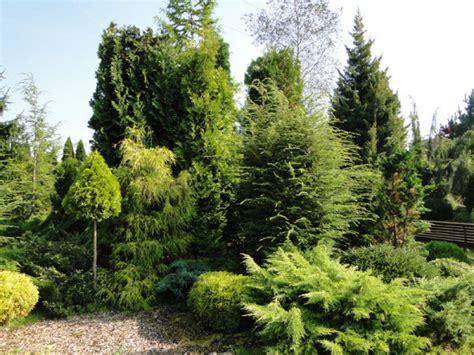 Kupka Garten by Zmiana Przepis 243 W Dotyczących Wycinki Drzew I Krzew 243 W