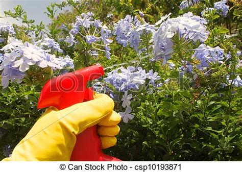 picture of spraying pesticide on garden flowers