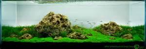 Dragon Stone Aquascape Ada Adg 180cm Iwagumi Revisited Aquascaping Aquatic