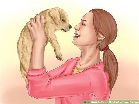 i want to buy a golden retriever puppy 3 ways to buy a golden retriever puppy wikihow