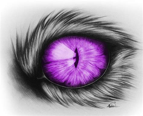 cat eye drawing cool domestic cats house cat eye drawing drawing by