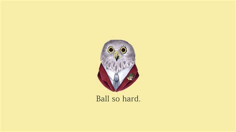 Ball So Hard Meme - classless owl hd wallpaper download hd wallpapers