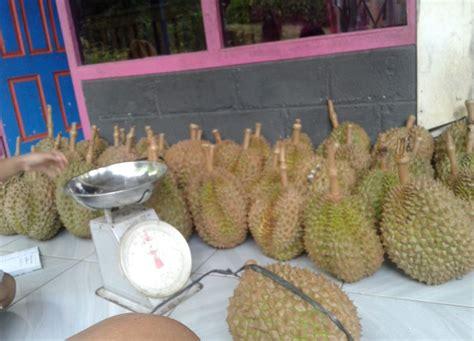 panen durian super pasca panen  mutu   pengemasan