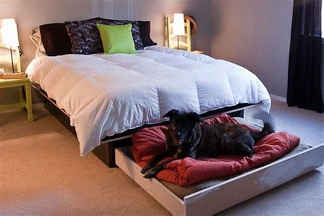 diy hidden   bed   bed   dog