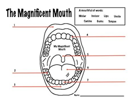 dental anatomy coloring book pdf dental health magnificent worksheet by kate s
