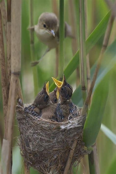 269 best mother bird parent birds feeding their chicks