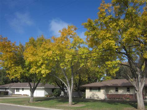 tree fresno ca 301 moved permanently