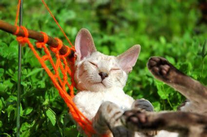 swings katze petcyclopedia cat and tips
