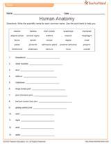 printable anatomy quiz anatomy quiz grade 8 printable teachervision
