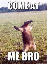 Anteater Meme - come at me bro anteater