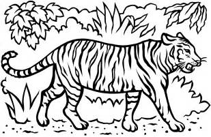 free coloring pages of sumatran tiger