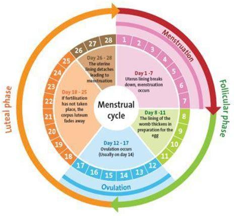 missed menstrual cycles missed menstrual cycle menstrual cycle pinterest