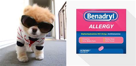 is benadryl safe for dogs can i give my benadryl guidelines dosage trulygeeky