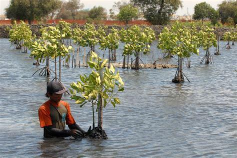 Upaya Pelestarian Lingkungan Hidup Ori b pelestarian lingkungan