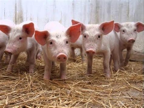 imagenes otoñales con animales animales de la granja imagenes y sonidos reales youtube