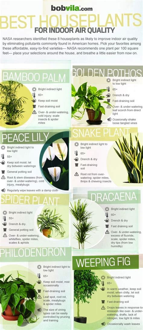 infographic  houseplants  indoor air quality air