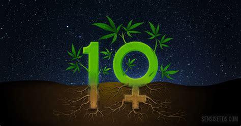 si鑒e habitat 10 interessante fakten zu feminisierten cannabissamen