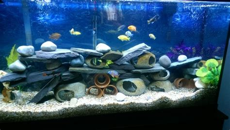Colour Combination For Walls by Selecting A Background For Your Freshwater Tank Ratemyfishtank Com