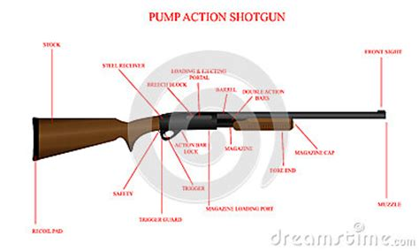 Labeled Shotgun Diagram Stock Image   Image: 33392141