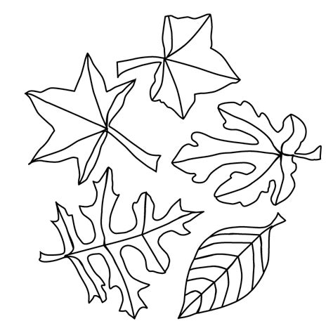 fall leaves picture fall leaves coloring page
