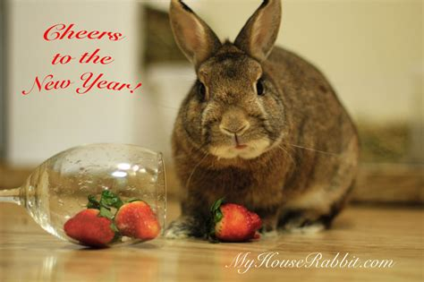rabbit in new year 2015 rabbit photos bunny bunny