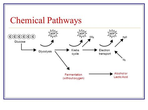 Section 9 1 Chemical Pathways by Cellular Respiration Chapter 8 Ppt