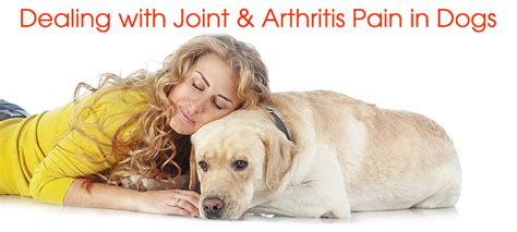 joint medicine for dogs medication for dogs joint supplements arthritis